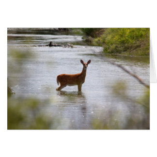 Deer Greeting Card