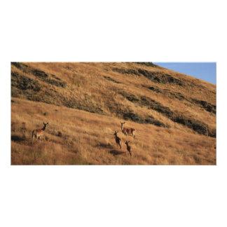 Deer Hill Photo Greeting Card