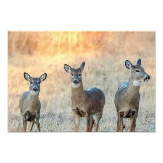 Deer in a field photograph