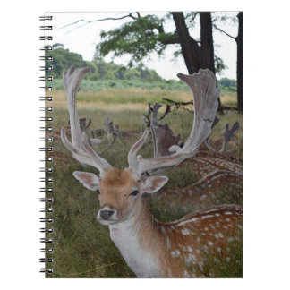 Deer in a park notebook