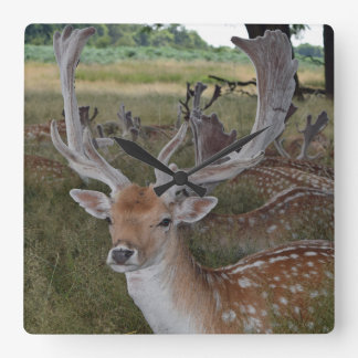 Deer in a park square wall clock