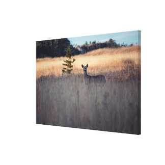 Deer in field of tall grass canvas print