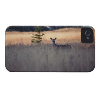 Deer in field of tall grass iPhone 4 covers