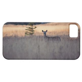 Deer in field of tall grass iPhone 5 case