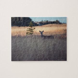 Deer in field of tall grass jigsaw puzzle