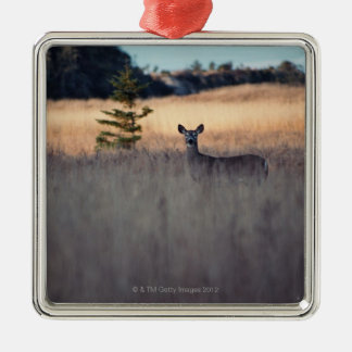 Deer in field of tall grass Silver-Colored square decoration