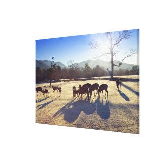Deer in park in Nara, Nara Prefecture, Japan Canvas Print