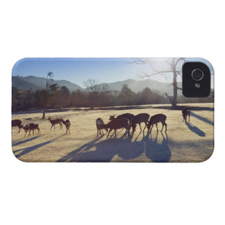 Deer in park in Nara, Nara Prefecture, Japan iPhone 4 Cover