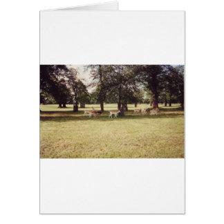 Deer in Richmond Park Greeting Card