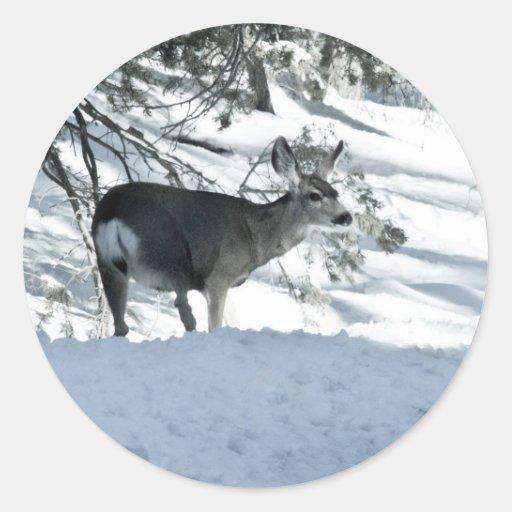 deer in snow sticker
