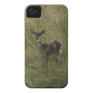Deer in tall grass iPhone 4 cases