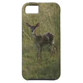 Deer in tall grass iPhone 5 cover