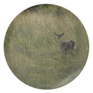 Deer in tall grass plate