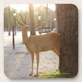 Deer in the city coaster