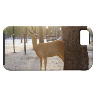 Deer in the city iPhone 5 cover