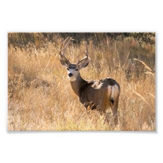 Deer in the Fall Print