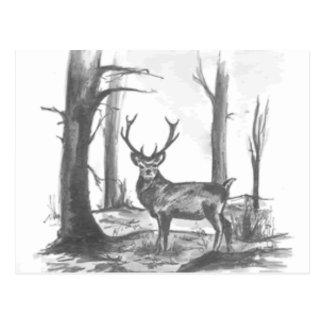 deer in woodsgif postcards