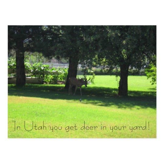 Deer in your yard! postcard