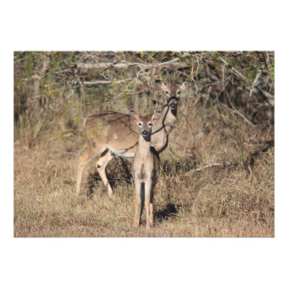 Deer Invitation Cards
