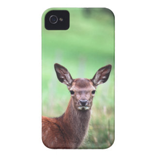 deer iPhone 4 covers