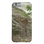 Deer iPhone 6 Case