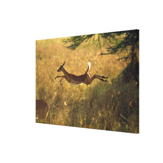 Deer leaping through field canvas print