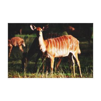 Deer Me Nyala Stretched Canvas Prints