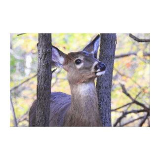 Deer Meeting in the Woods Canvas Print