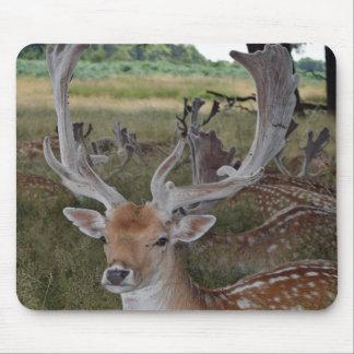 Deer mousepad