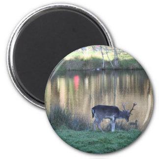 Deer Mug Magnet