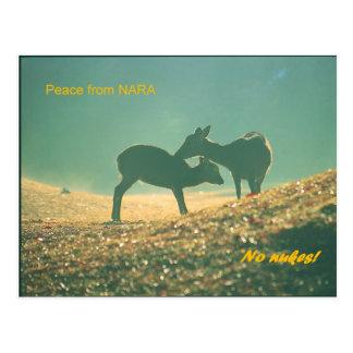 Deer nara postcard