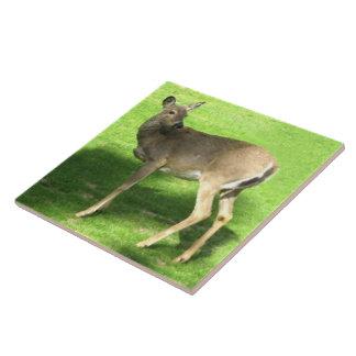 Deer on Grass  6x6 Large Square Tile