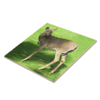 Deer on Grass  6x6 Tile