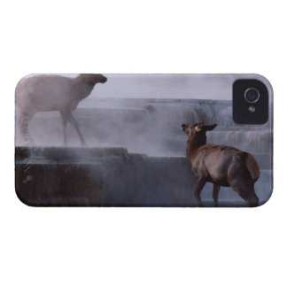 Deer on Rock Formation Case-Mate iPhone 4 Cases