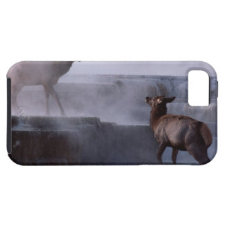 Deer on Rock Formation iPhone 5 Cover