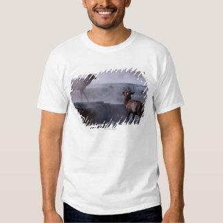 Deer on Rock Formation Tshirt