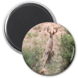 Deer on the Run Refrigerator Magnet