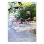 Deer on Walk