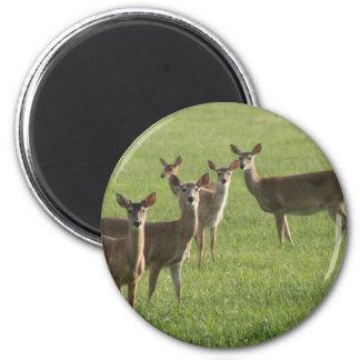 Deer Paradise Magnet