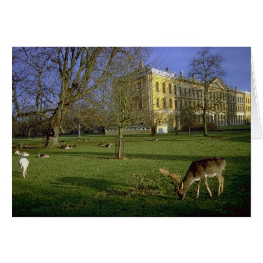 Deer park, Magdalen College, Oxford, U.K. Card