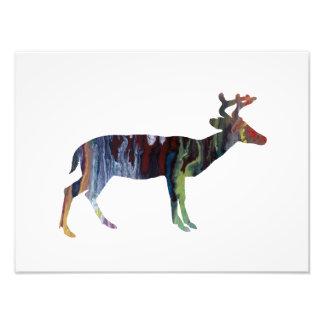 Deer Photo Print