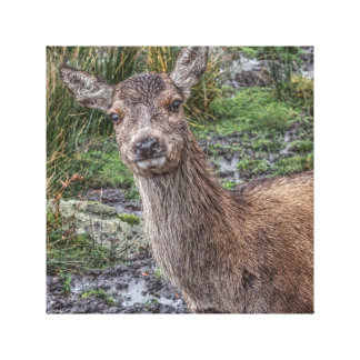 Deer photograph canvas print