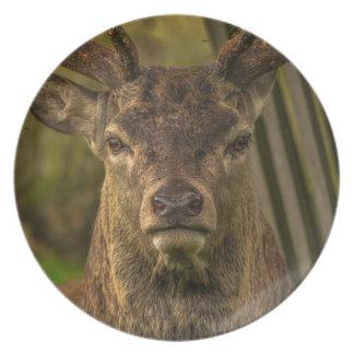 Deer Plates
