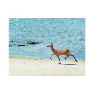"""Deer Prancing Lake Erie Beach"" jjhelene Canvas Canvas Print"