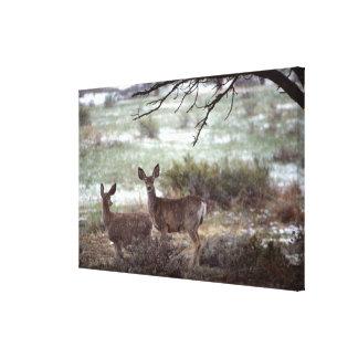 Deer running canvas print