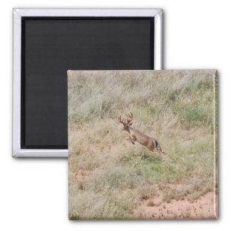 Deer Running Fridge Magnets