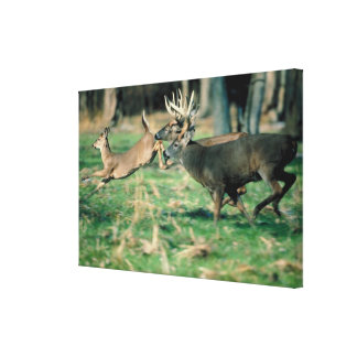 Deer running in forest canvas print
