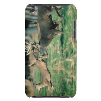 Deer running in forest iPod touch case