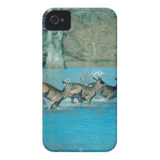 Deer running in water iPhone 4 case