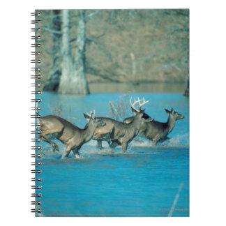 Deer running in water notebooks